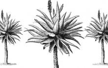 19th Century 'Elixir of Long Life' Found