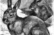 Great Archeological Discovery Made By Burrowing Rabbits