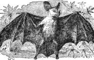 Transylvania in Fiction