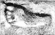 800 000 Year Old Footprints Found in Britain
