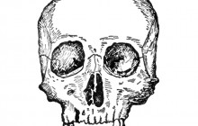 Archaeologists Discover an 8000 Year Old Skull in Norway