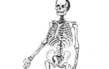 6500 Year Old Skeleton Found in University of Pennsylvania