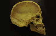 DNA Reports of Ancient Human Skulls Shed Light on Dairy Use