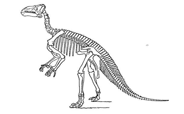 Remains of New Species of Two-Footed Dinosaur Unearthed In Venezuela