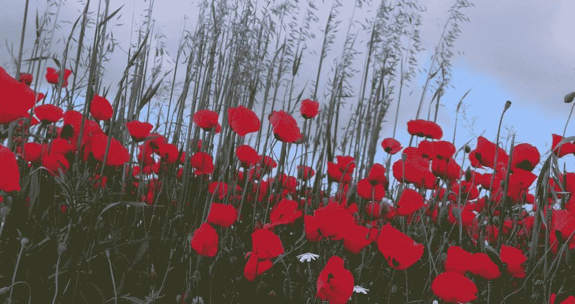 The Controversial History of the Poppy