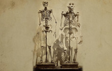 New Research Into the Evolution of Our Lightweight Skeletons