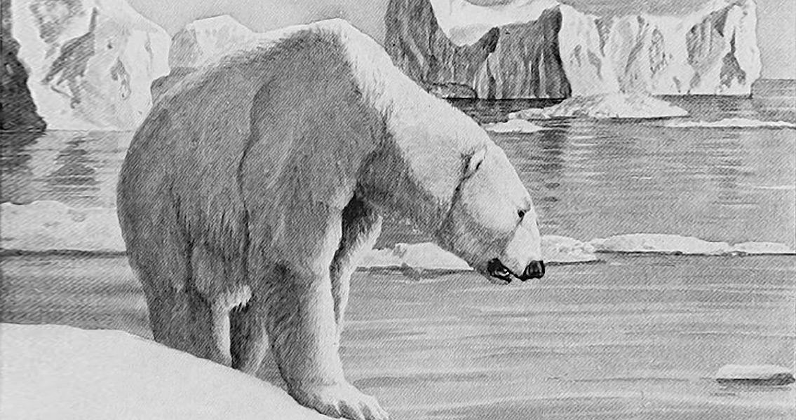 Gunshot Wound Turns Out to be a Polar Bear Attack