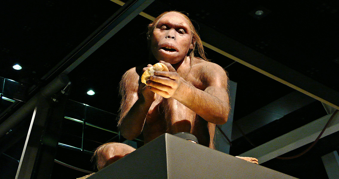 Hominid Diet was Surprisingly Varied