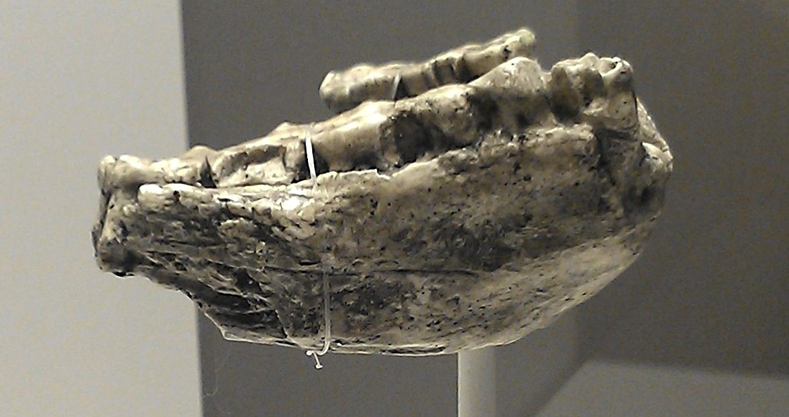 Jawbone Fossil Analysis Could Push Back Human Origins