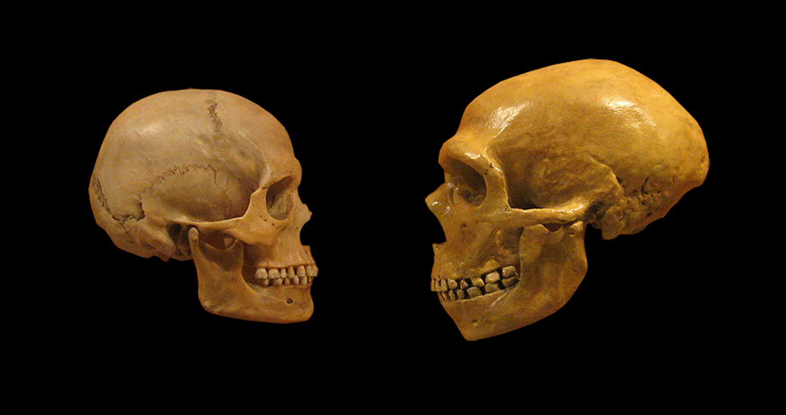 Comparison of Human and Neanderthal Skulls