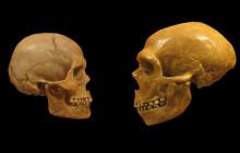 Story of Human Evolution Challenged