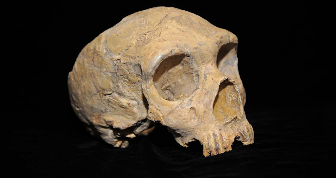 Neanderthal Gender Division of Labour Revealed