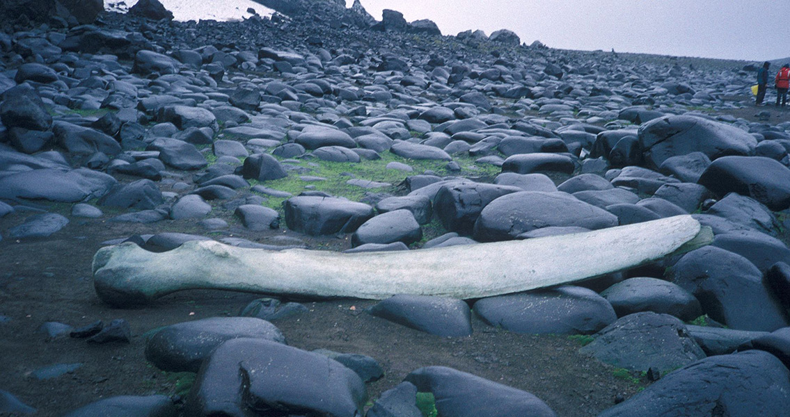 Ancient Whalebone Tells When East Africa Began to Rise