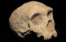 New Evidence Supports Humans' Role in Neanderthal Demise