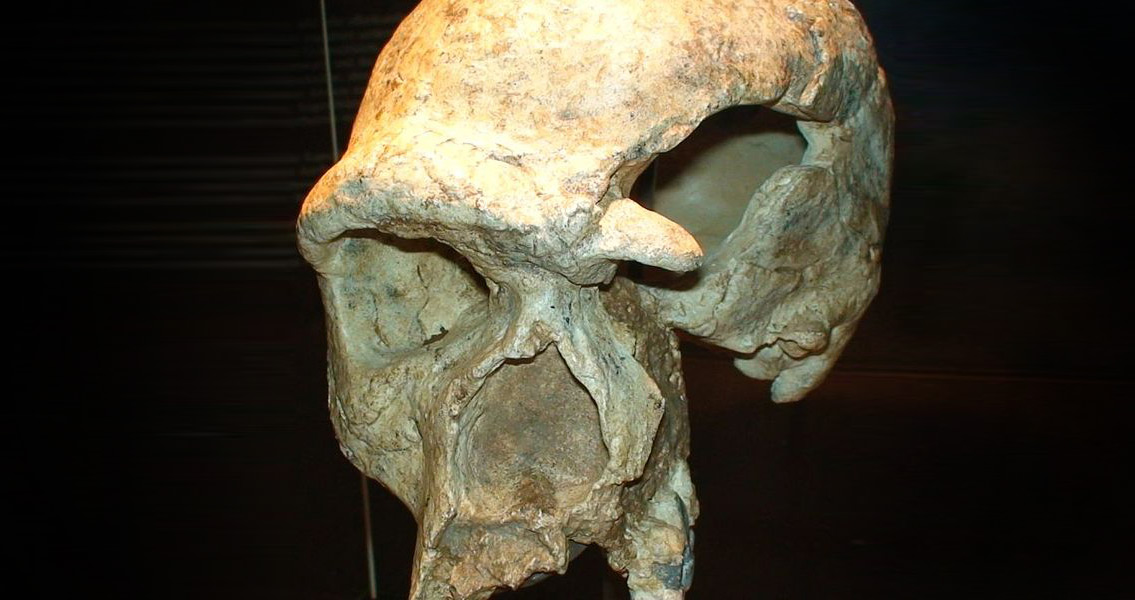 Modern Humans Brought Fatal Disease to Neanderthals