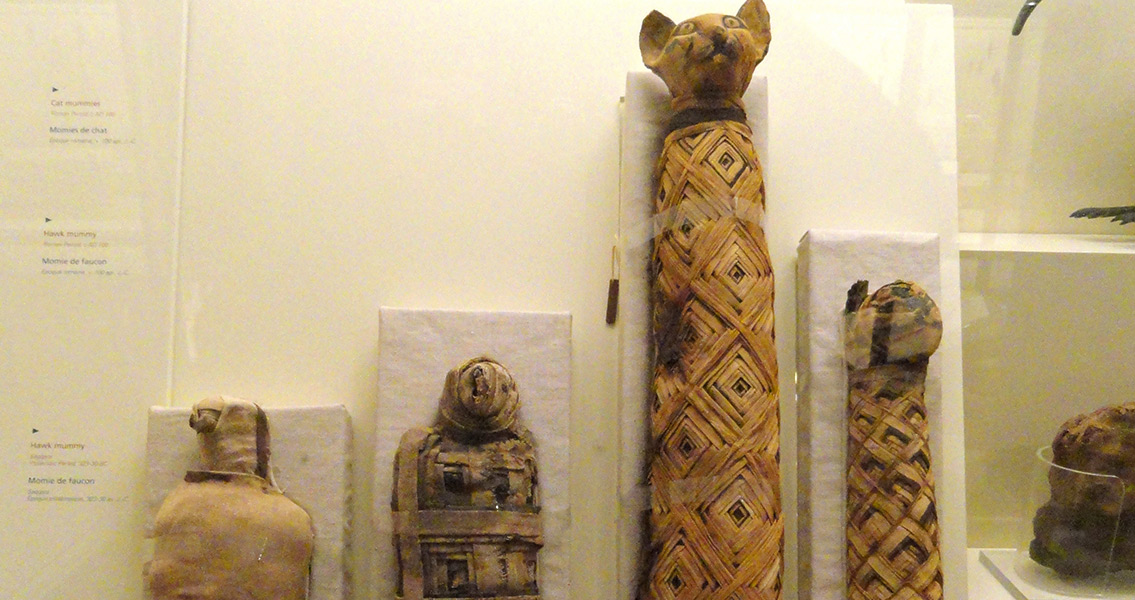 Up to a Third of Animal Mummies Don't Contain a Body
