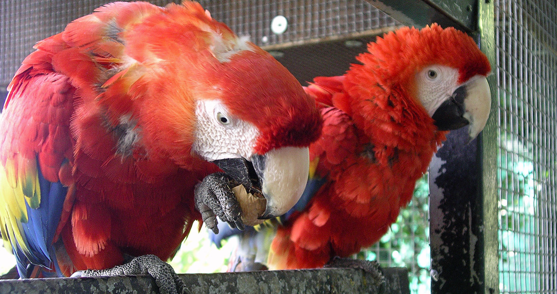 Scientists Carbon Date Macaw Remains from Pueblo Ruins