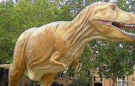 Dinosaurs Were Warm Blooded, Paleontologist Says