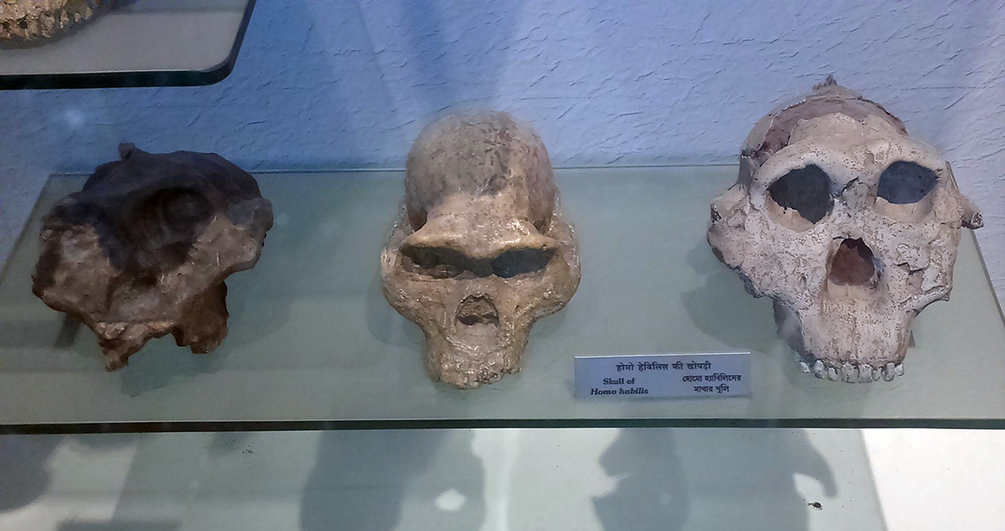 Homo Habilis Were First Out of Africa