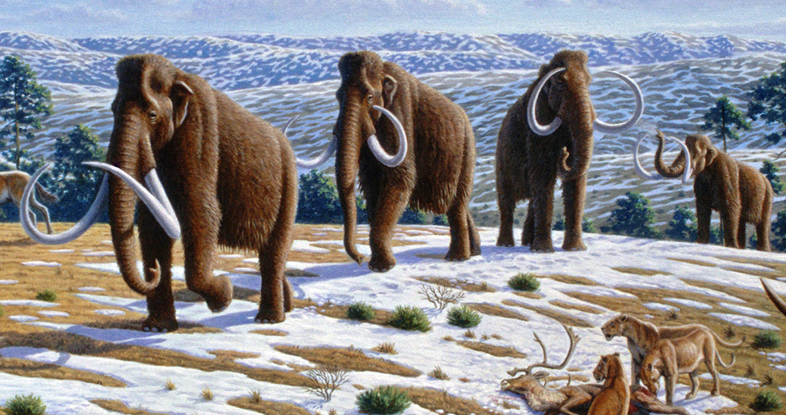New Tool For Studying Extinct Animals