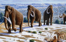 Warmer Climate May Have Contributed to Mammoth Extinction