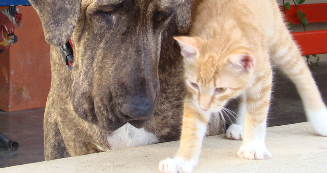 Cats Brought Extinction to Dog Species in North America