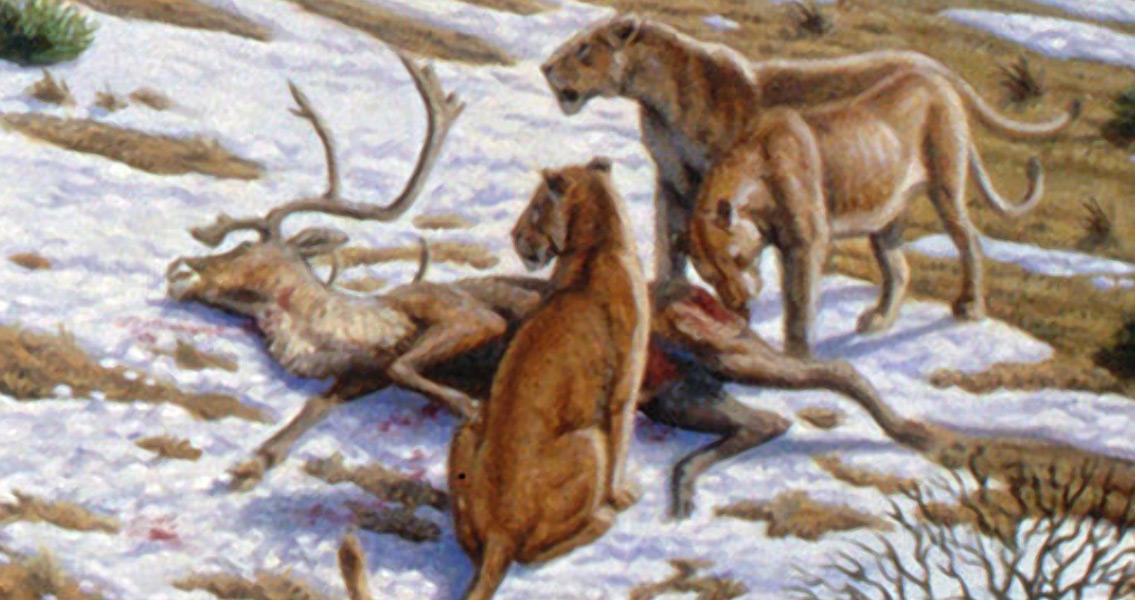 New Treasure Trove of Cave Lion Bones Discovered