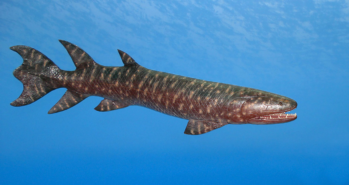 Bone Could Link Transition From Fish to Tetrapods