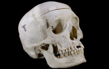 Beheading in New World Much Older Than Thought