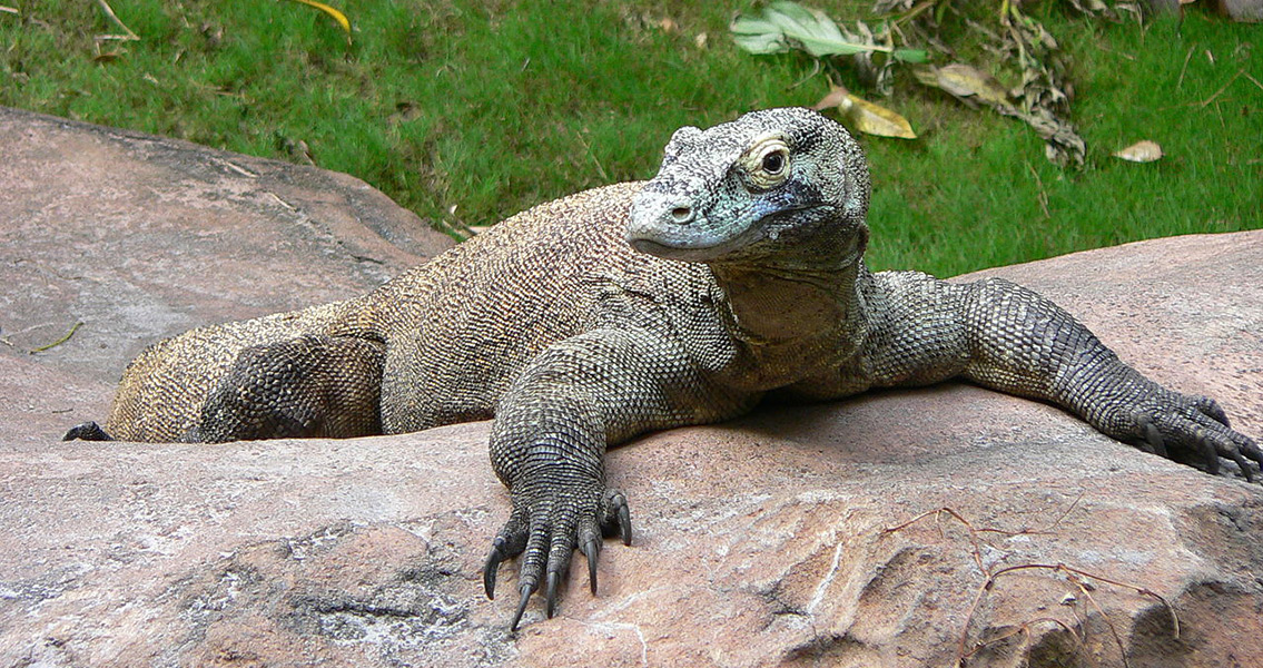 humans and giant lizards coexisted in australia