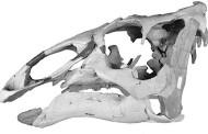 New Polar Dinosaur Species Discovered
