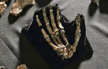 Homo naledi: Walker and Handyman