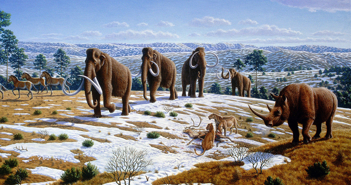 Hunting Contributed to Mammoth Demise
