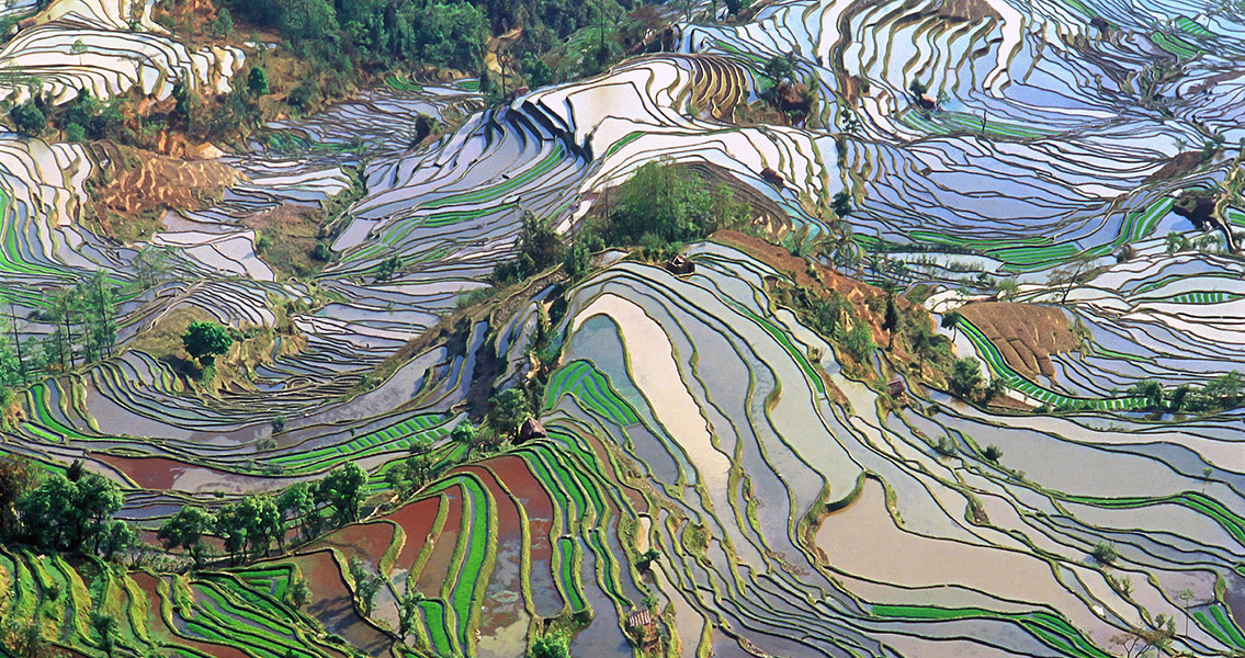 Rice Domestication Traced Back to 6300 BCE