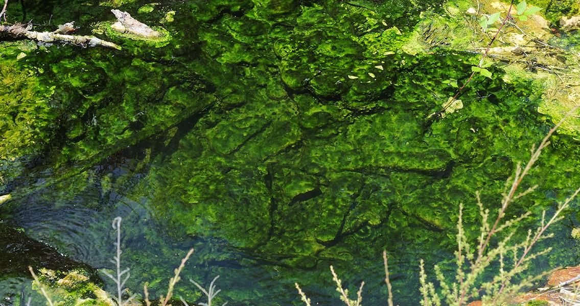 Ancient Algae Precursor to Great Oxidation Event?