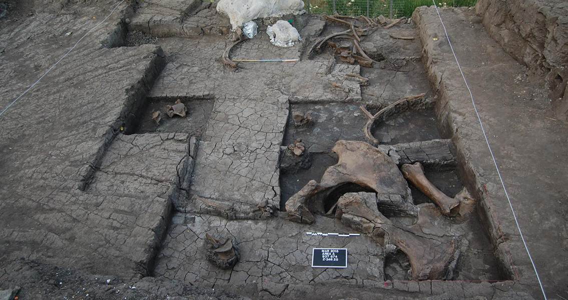 New Paleolithic Elephant Butchering Site Discovered