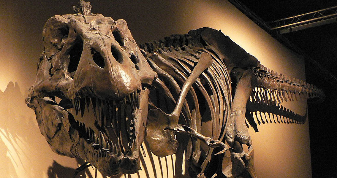 T-Rex Bone Speaks of Cannibalism