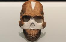 Skull Study Dates Homo naledi to Two Million Years Ago