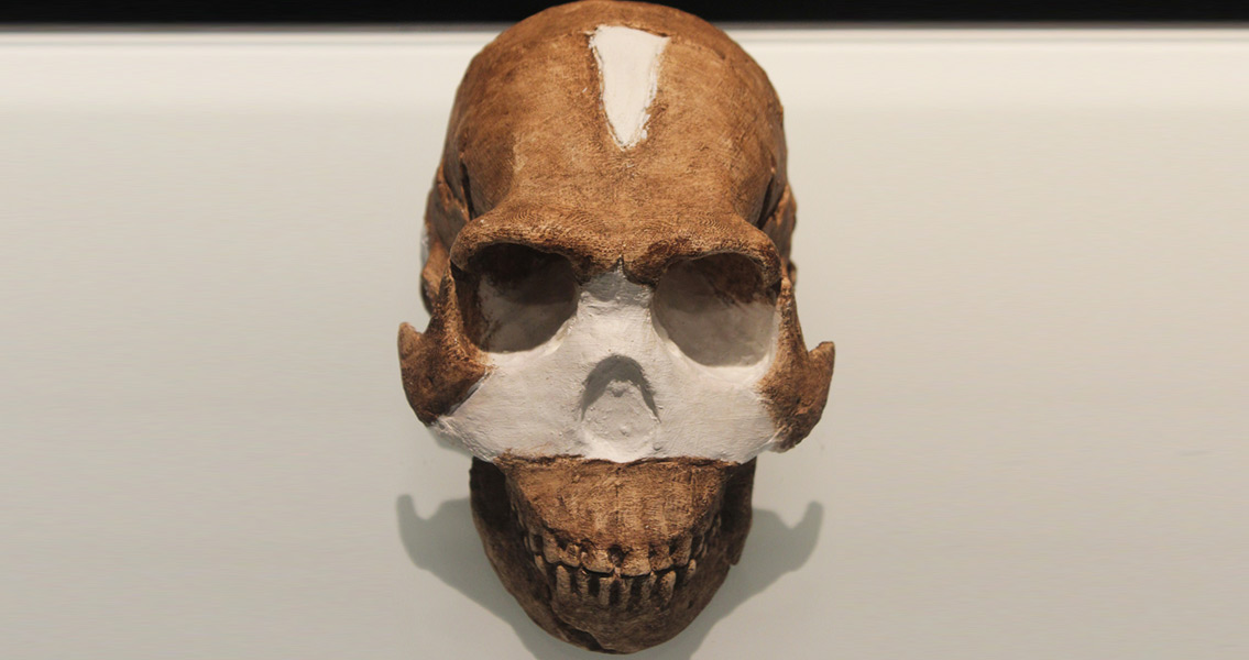 Skull Study Dates Homo naledi to Two Million Years Ago