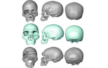 Last Common Ancestor of Us and Neanderthals Revealed