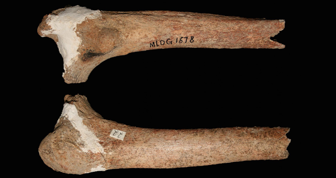 Partial Thighbone Could Identify a New Pre-Modern Human