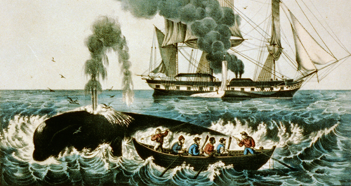Modern Researchers Turn to Historical Whaling Record