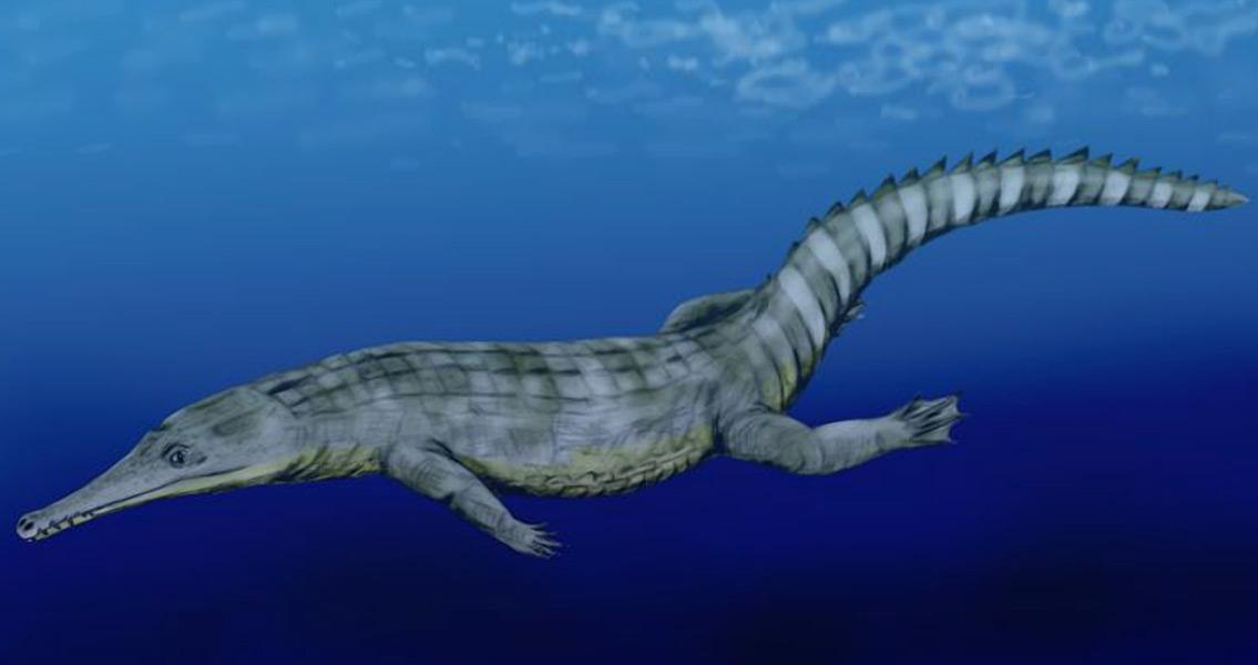 Remains of Massive Ancient Crocodile Found in Tunisia
