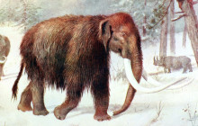 Arctic Mammoth Killed By Humans 45,000 Years Ago