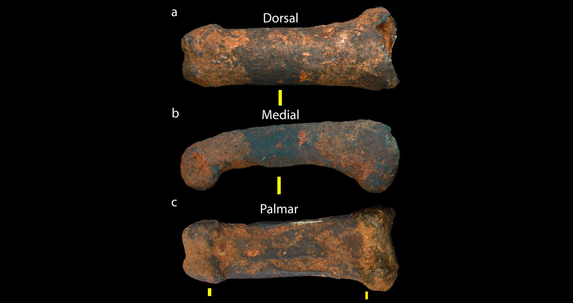 The Cradle of Humankind Reveals Another Clue to Our Origin