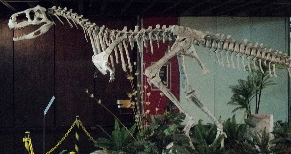 Discovery of Dinosaur Bone Leads to Realm of Possibilities
