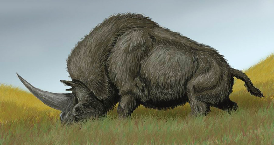 Date of Siberian Unicorn's Extinction Later Than Thought?