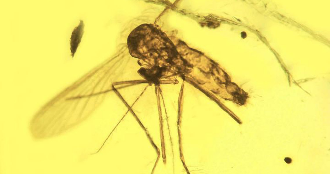 Malaria Was Around With The Dinosaurs