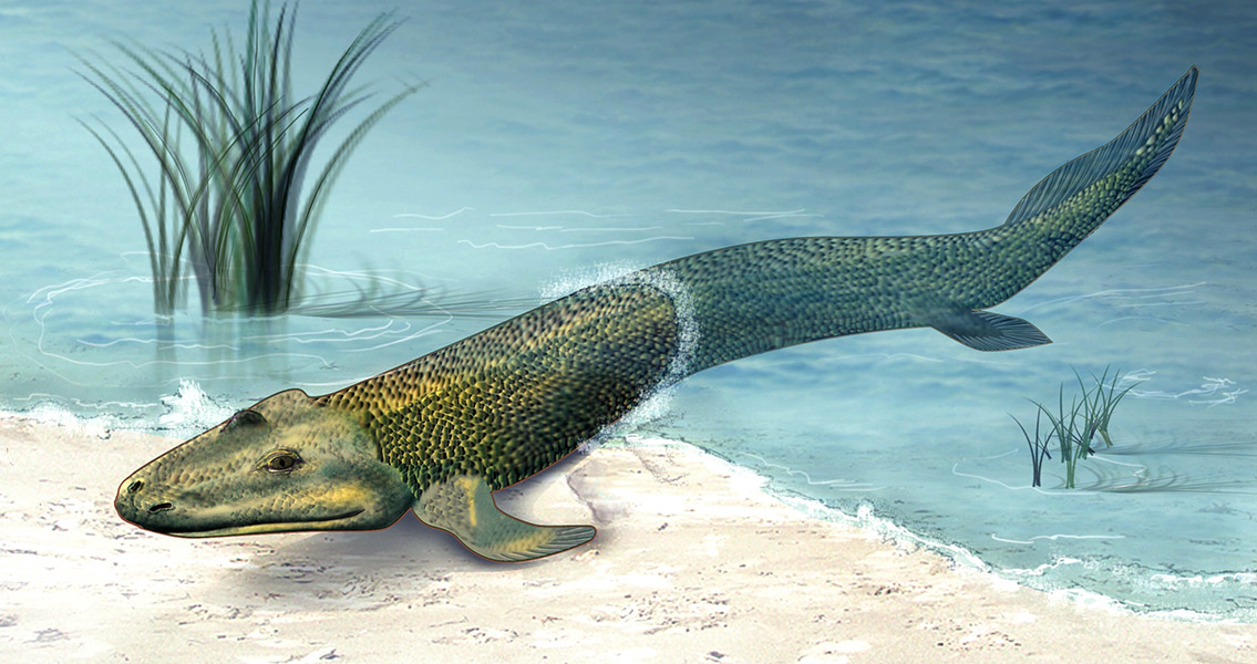 The Evolution of Fins and Limbs More Similar Than Originally Believed