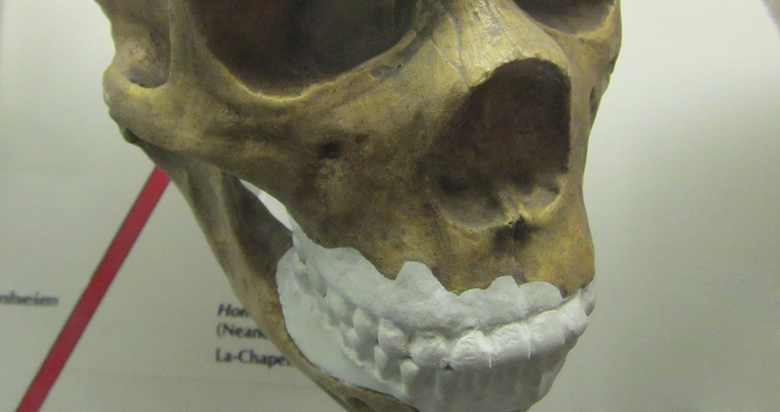 Did Neanderthals Brush Their Teeth?